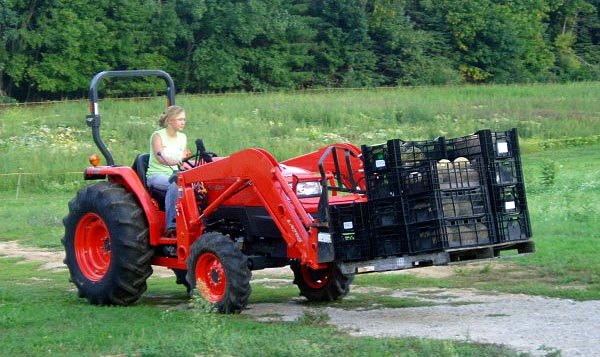 We hand pick everything then load it on the tractor to bring it up to the house for sorting and inspection.
