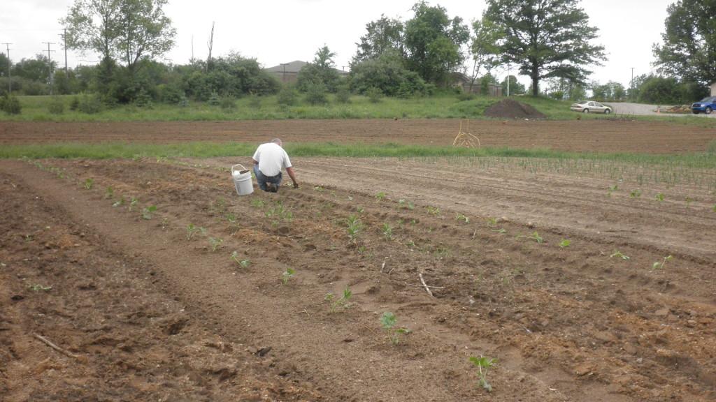 planting the spring garden