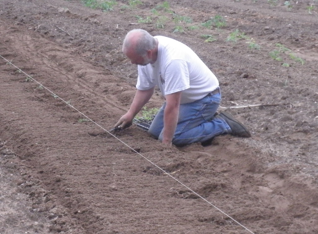 Eric putting plants in the garden.